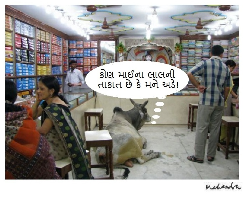 Cow In A Store