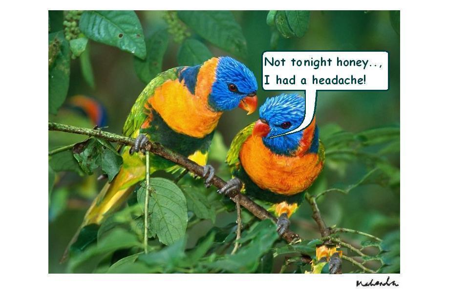 Not Tonight Honey.., I Had A Headache!